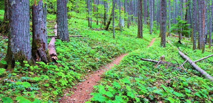 Best Hiking Trails Near Spokane