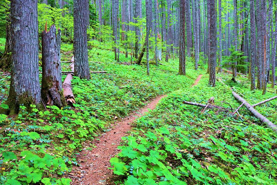 Hiking Spokane